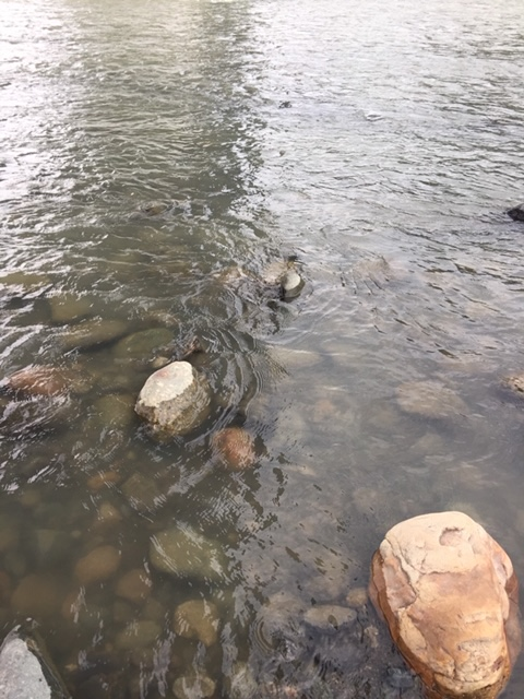 2019年9月11日(水)相模川の状況