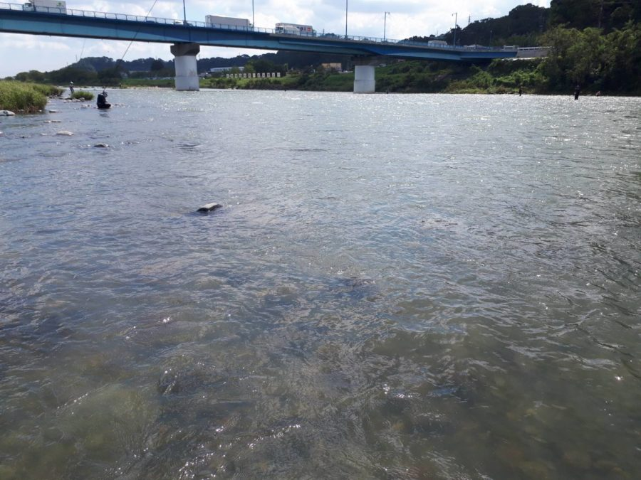 小室様〜高田橋橋上左岸・アユ9匹/最大21cm〜