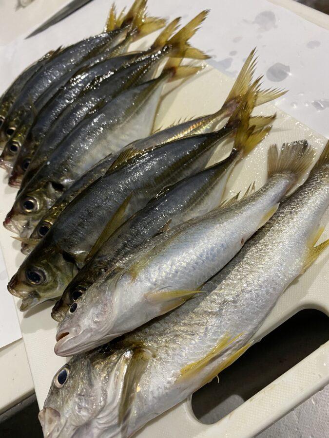 10月の爆釣モーニングは、「LTアジ釣り」をピックアップ!